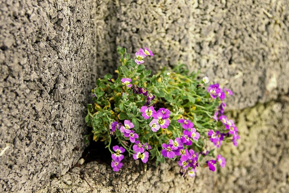 květina na zdi